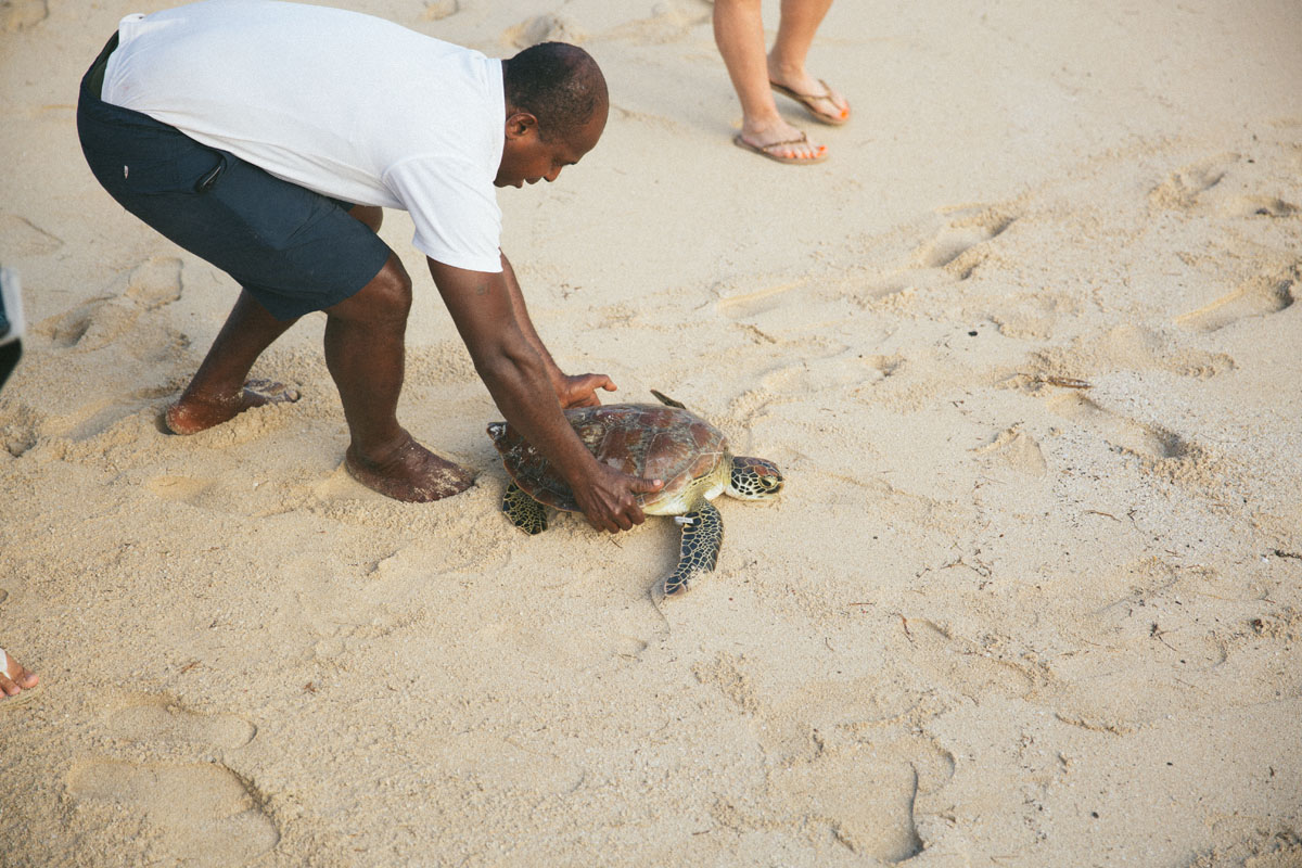 Turtle Island conservation